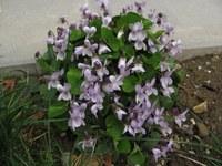 Jaro na našem školním dvoře